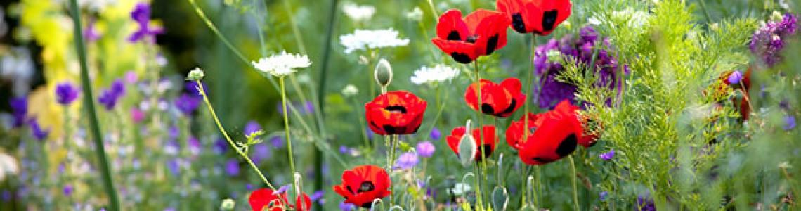 Amenajare grădină: 10+ sfaturi și idei
